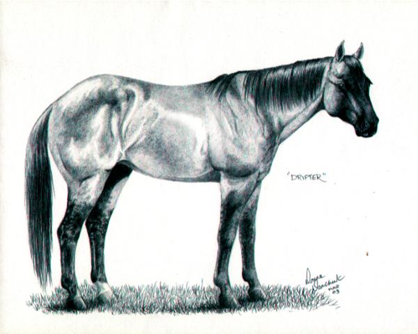 Quarter horse drawing - photo#1